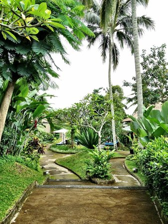Bali Rich Luxury Villas Ubud:                   Hotel surroundings