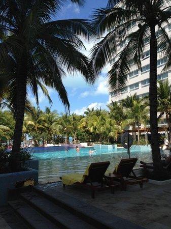 Oasis Palm:                   Playa