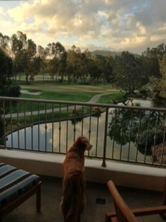 Four Seasons Residence Club Aviara, Carlsbad Ca.:                   View from Meadows unit #5121 at sunrise