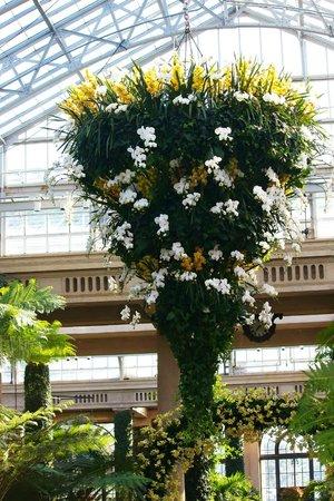 Longwood Gardens:                   Orchid Chandelier