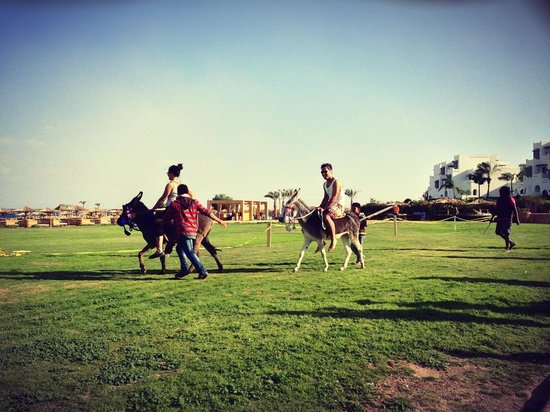 Mercure Hurghada Hotel:                   Donkey Race!