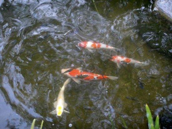 Nora Beach Resort and Spa: Nice fish