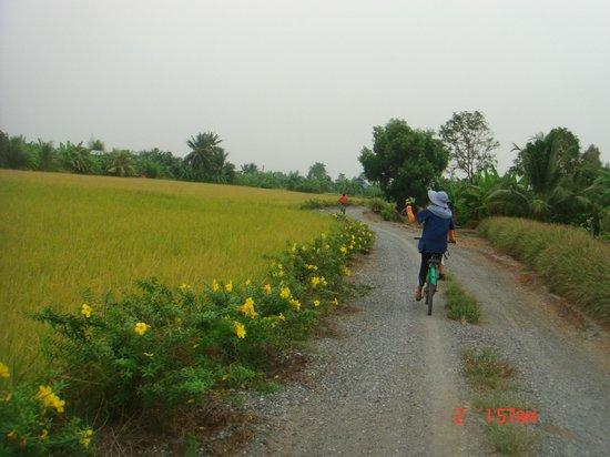 Absolute Explorer:                   Balade en rizière