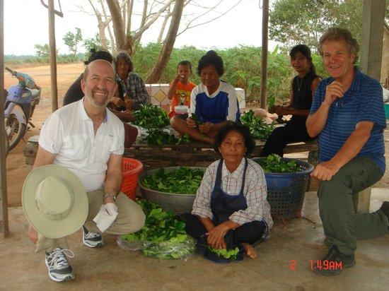 Absolute Explorer:                   feuilles servant d'épices dans la cuisine thaïlandaise