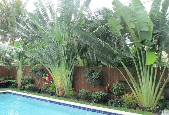 Island Sands Inn:                   Garden