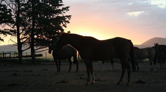 Campo Equino Cabalgatas:                   bellos caballos...