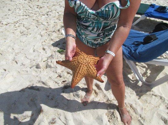 Viva Wyndham Tangerine :                   Grosse etoile de mer vivante remis a la mer bien sur