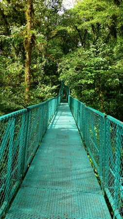 Monteverde Country Lodge:                   Canopy Walk in Monteverde