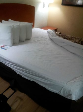Red Roof Inn Orlando South - Florida Mall:                   No bed bugs