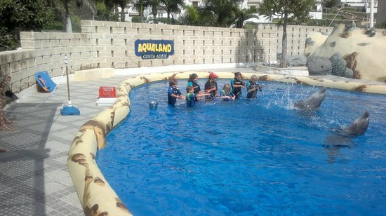Aqualand Costa Adeje: Controlling dolphins in the training pool