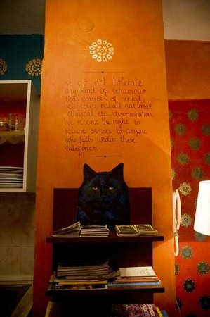 Stray Cat Hostel: Common Area Philosophy