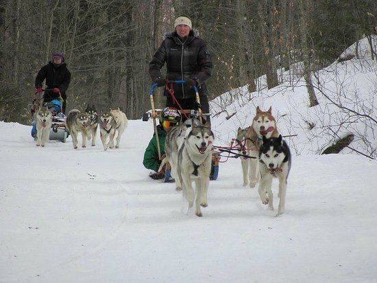 Valley Snow Dogz: Waterville Valley Tours