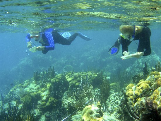 Oceanic Society Field Station: Volunteers monitor the coral reef.