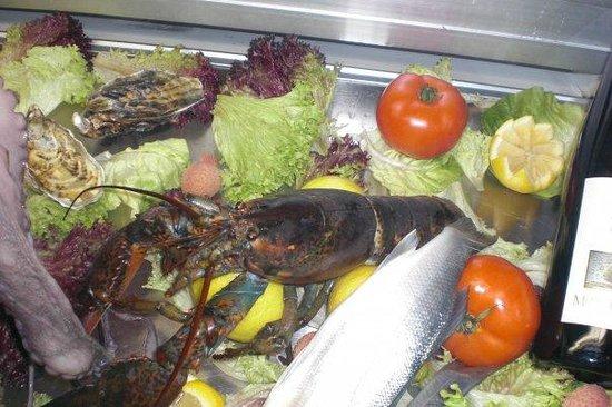 Coccobrillo:                   esposizione pesce