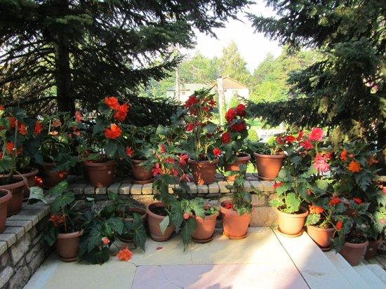 Hotel Akademia :                   Beautiful Blooming Begonias