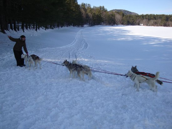 Barking Brook Sled Dog Adventures - Day Trips:                   Getting ready