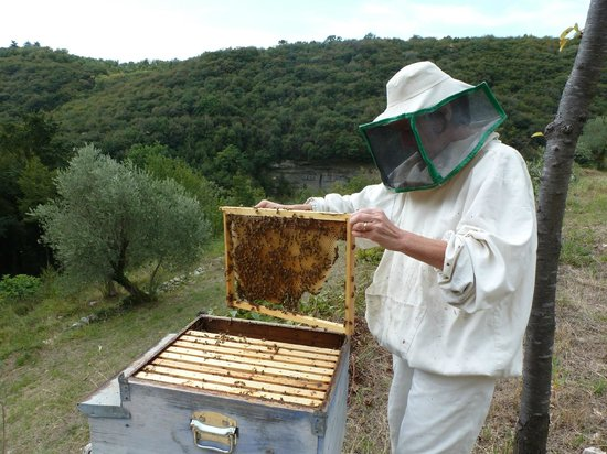 Ca del Rocolo:                   Ilaria bee-keeping