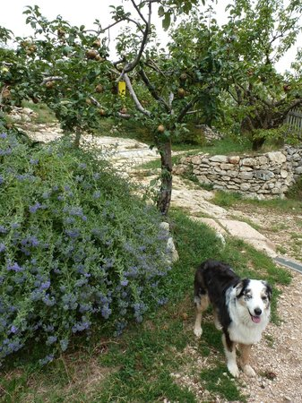 Ca del Rocolo:                   family pet and fruit trees