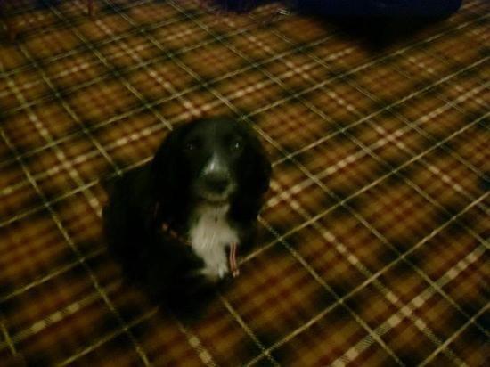 Inch Hotel:                   marley loved the tartan!