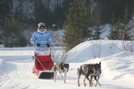 Hotel Lek:                   The dog sled trip!