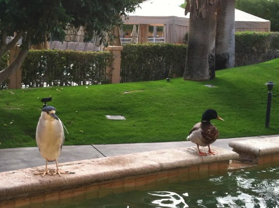 Westin Mission Hills Golf Resort & Spa: Cute birds near the outdoor dining area
