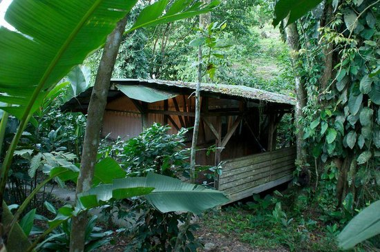 Omega Tours Eco Jungle Lodge: Creekhouse - basic but nice