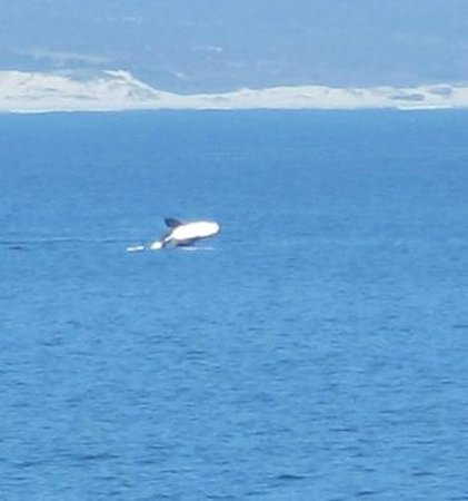 6 Stemmet Lodge:                   Whales