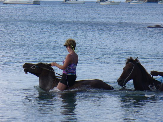 Sandals Grande St. Lucian Spa & Beach Resort:                   swimming with the horses