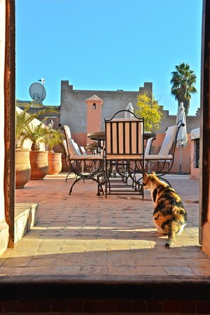 Riad Dar Mimouna Hotel:                   terrazza