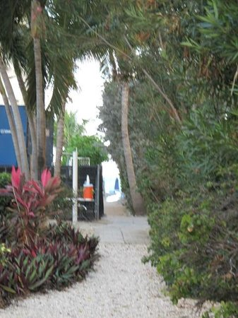 Comfort Suites Seven Mile Beach:                   pathway