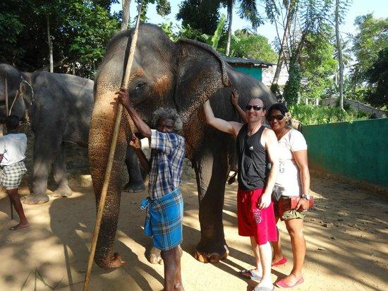 Pinnawala Elephant Orphanage:                   seita our elephant