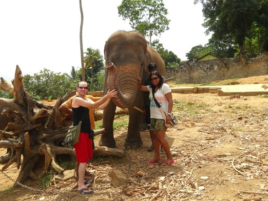 Pinnawala Elephant Orphanage:                   open area . tip wisely here