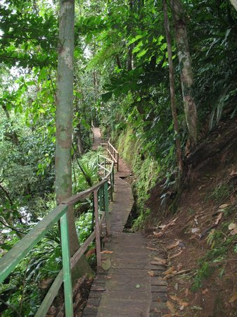 Tirimbina Biological Reserve:                   One of the many rainforest trails at Tirimbina