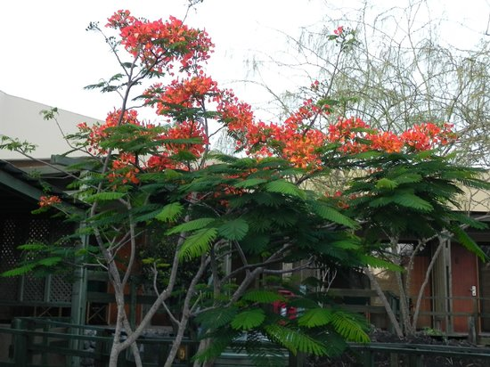 Finch Bay Galapagos Hotel:                   Beautiful flowers in the hotel setting