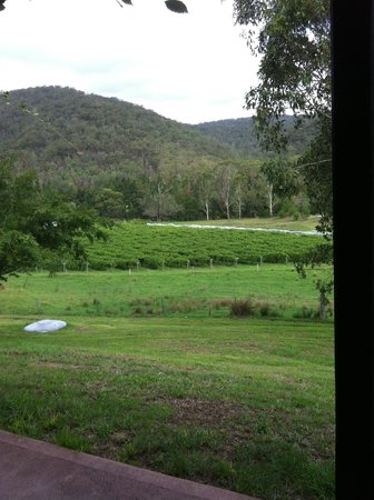 Cedar Creek Cottages:                   Vines