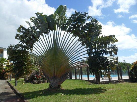 Residence Hoteliere Les Cayalines:                                     L'arbre du voyageur