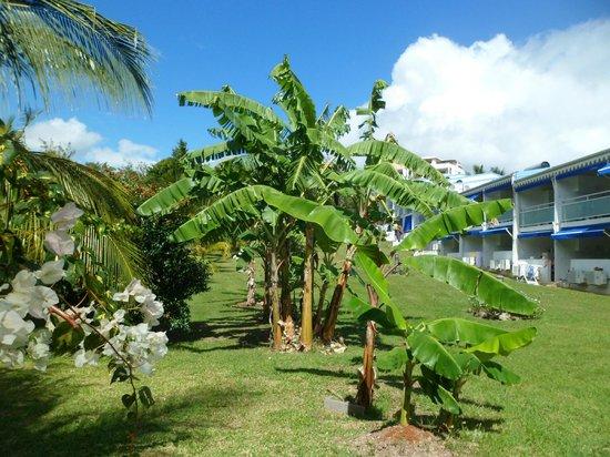 Residence Hoteliere Les Cayalines:                                     Une résidence dans la verdure
