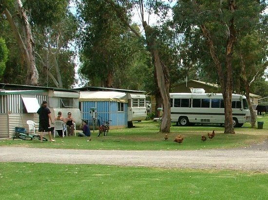Harvey, Australia:                                     Happy campers