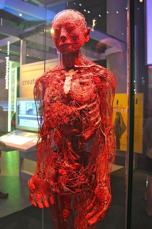 Great Area On The Human Body Picture Of Museum Of Science And