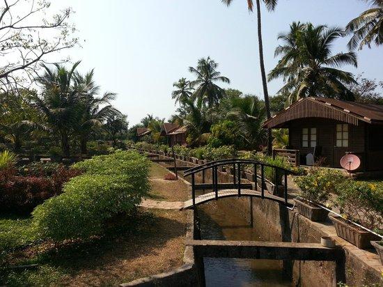 Resort Primo Bom Terra Verde :                   Backyard