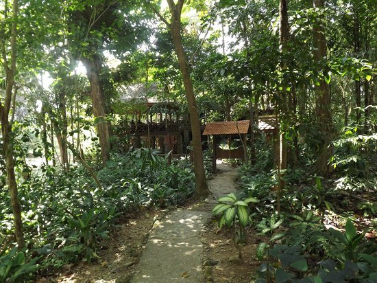 Art's Riverview Jungle Lodge 사진