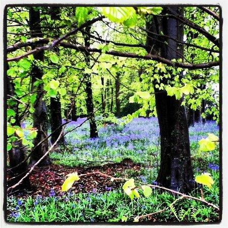 Longbarn House : Blue Bell Wood Walk in April
