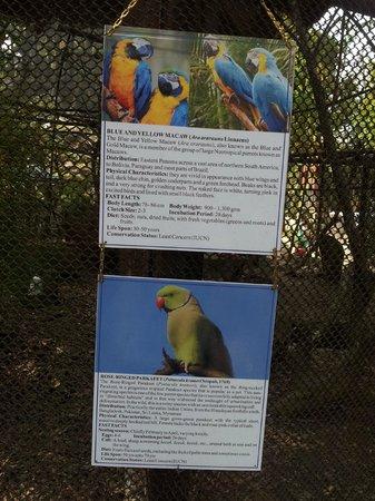 Padmaja Naidu Himalayan Zoological Park:                   Zoo  4