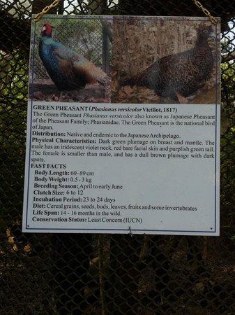 Padmaja Naidu Himalayan Zoological Park:                   Zoo 13