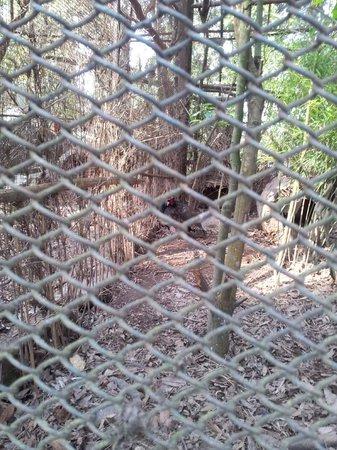 Padmaja Naidu Himalayan Zoological Park:                   Zoo 17