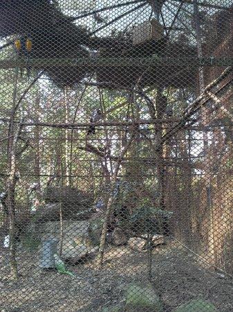 Padmaja Naidu Himalayan Zoological Park:                   Zoo 9