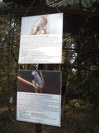 Padmaja Naidu Himalayan Zoological Park:                   Zoo 7
