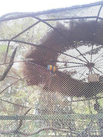 Padmaja Naidu Himalayan Zoological Park:                   Zoo 24