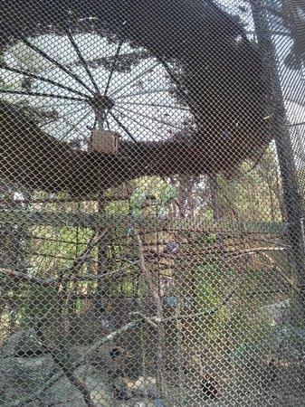 Padmaja Naidu Himalayan Zoological Park:                   Zoo 18