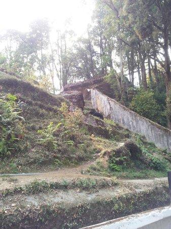 Padmaja Naidu Himalayan Zoological Park:                   Zoo 11
